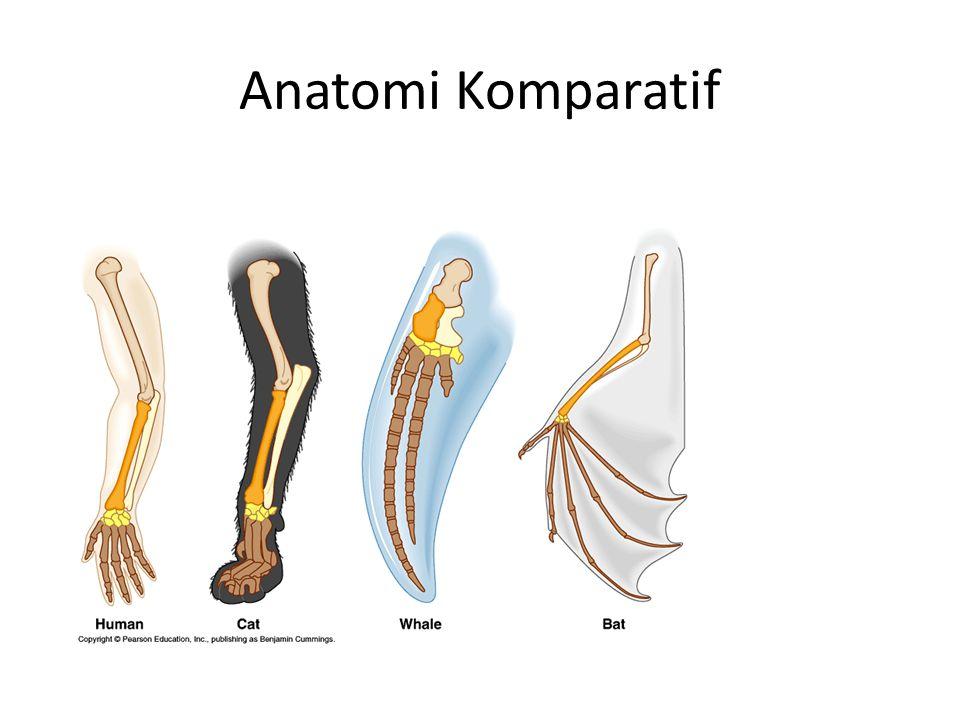Anatomi Komparatif