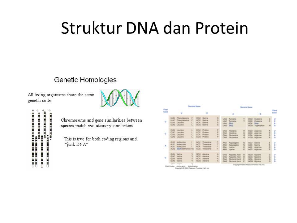 Struktur DNA dan Protein