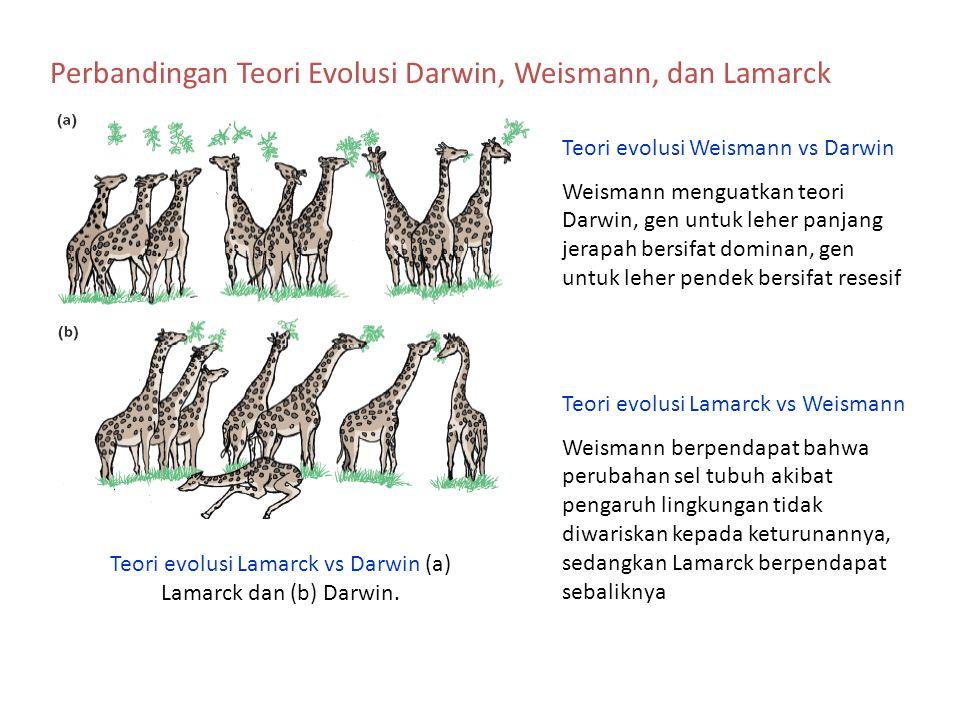 Teori evolusi Lamarck vs Darwin (a) Lamarck dan (b) Darwin.