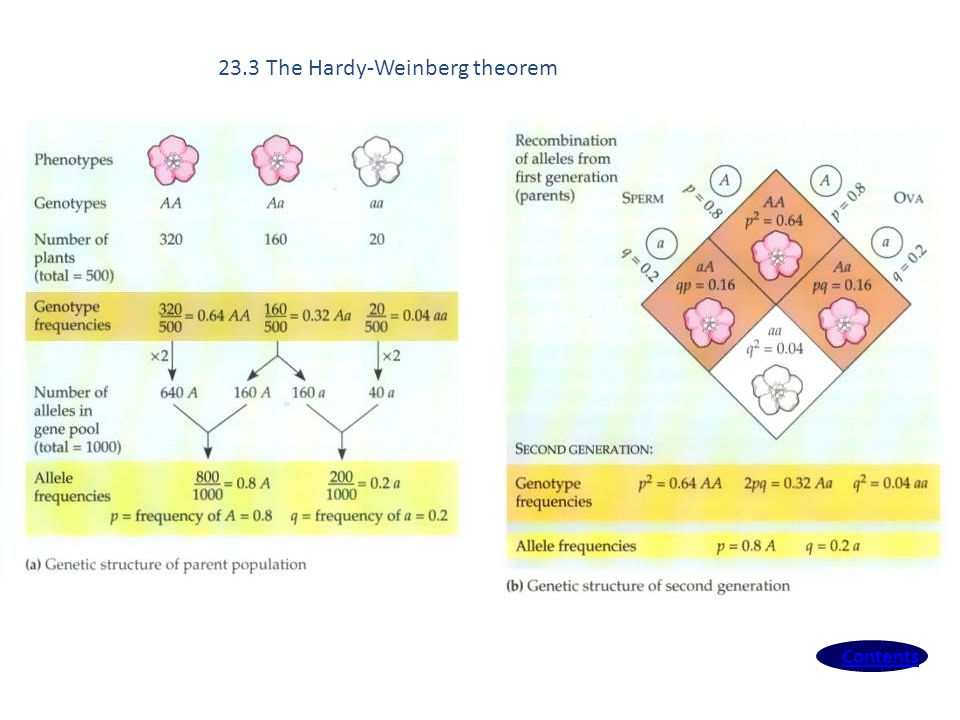 23.3 The Hardy-Weinberg theorem
