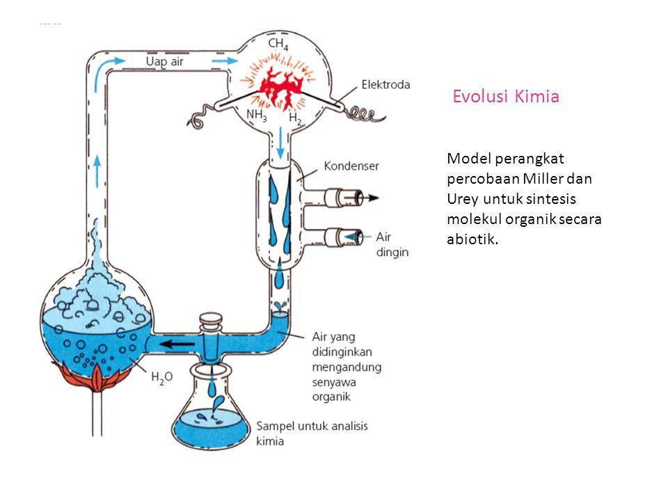 Evolusi Kimia Model perangkat percobaan Miller dan Urey untuk sintesis molekul organik secara abiotik.