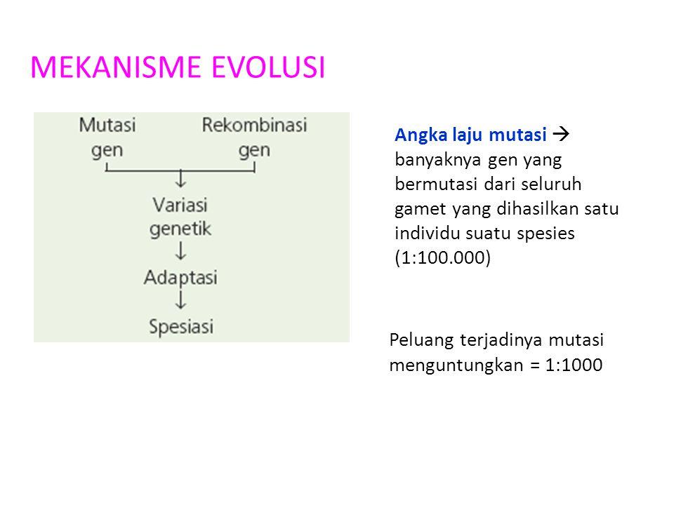 MEKANISME EVOLUSI Angka laju mutasi  banyaknya gen yang bermutasi dari seluruh gamet yang dihasilkan satu individu suatu spesies (1:100.000)
