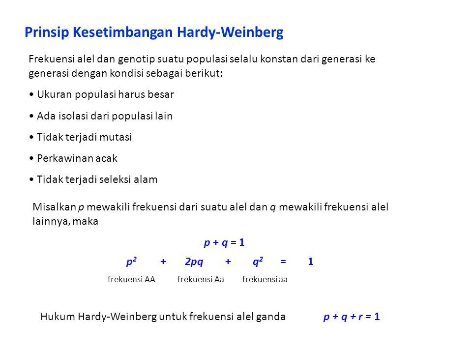 Prinsip Kesetimbangan Hardy-Weinberg