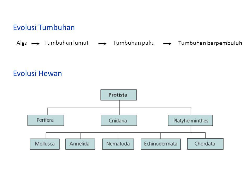 Evolusi Tumbuhan Evolusi Hewan Alga Tumbuhan lumut Tumbuhan paku