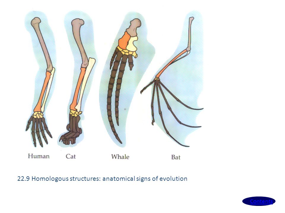 22.9 Homologous structures: anatomical signs of evolution