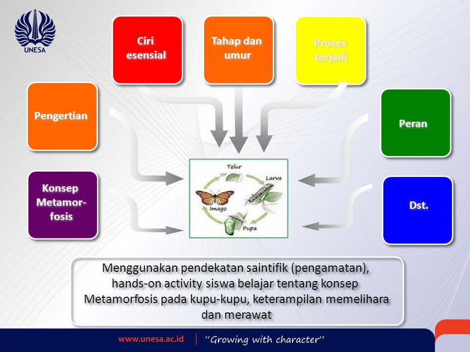 Menggunakan pendekatan saintifik (pengamatan),