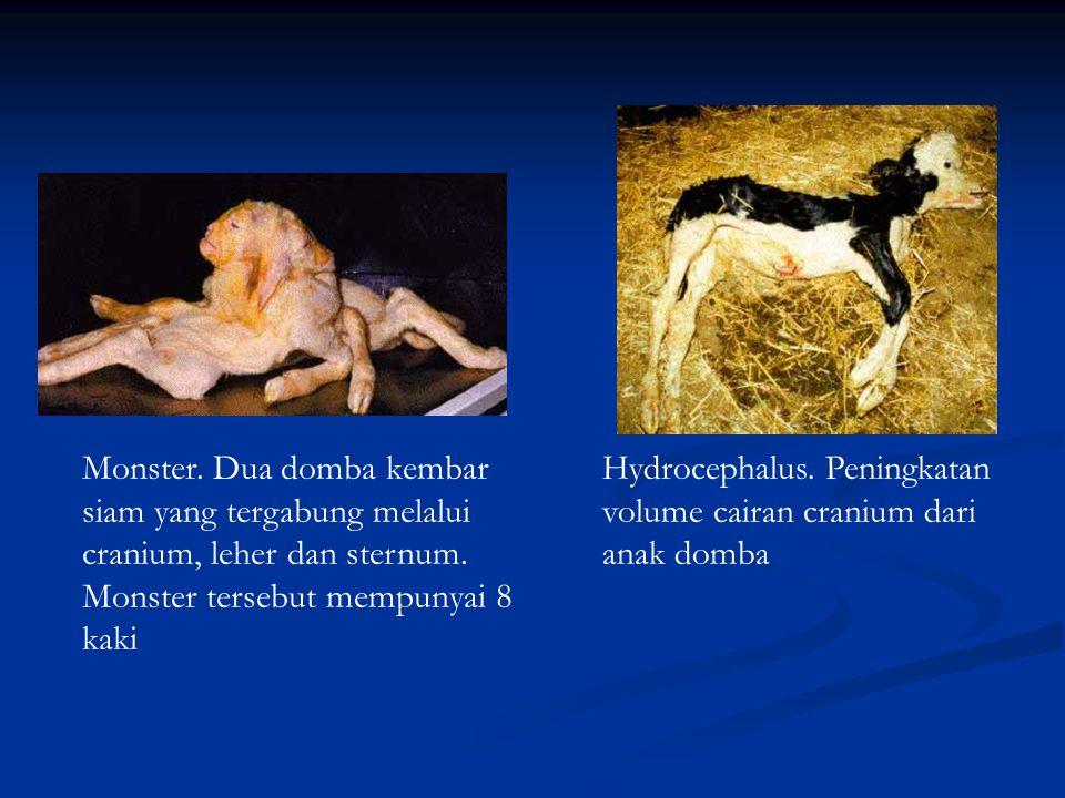 Monster. Dua domba kembar siam yang tergabung melalui cranium, leher dan sternum. Monster tersebut mempunyai 8 kaki