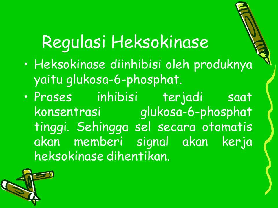 Regulasi Heksokinase Heksokinase diinhibisi oleh produknya yaitu glukosa-6-phosphat.
