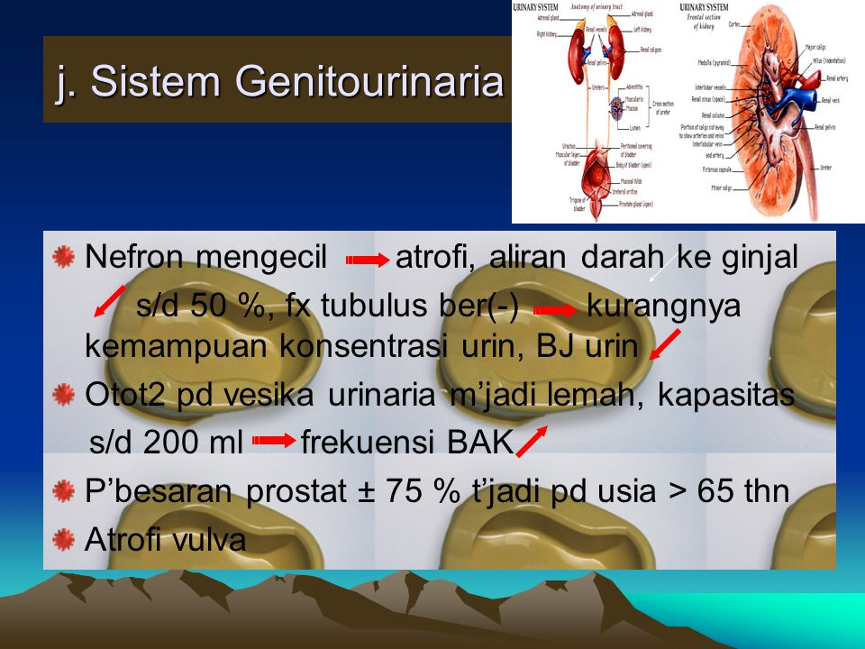 j. Sistem Genitourinaria
