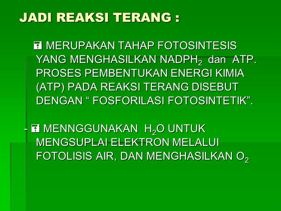 JADI REAKSI TERANG :