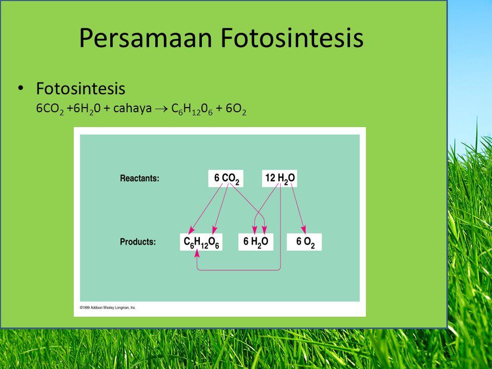 Persamaan Fotosintesis