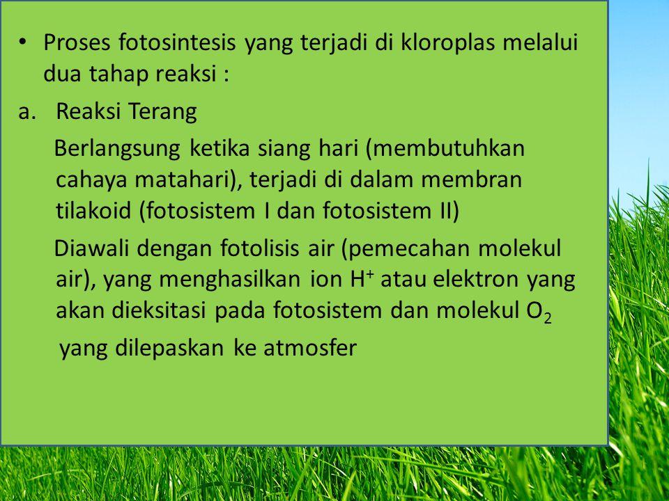 Proses fotosintesis yang terjadi di kloroplas melalui dua tahap reaksi :