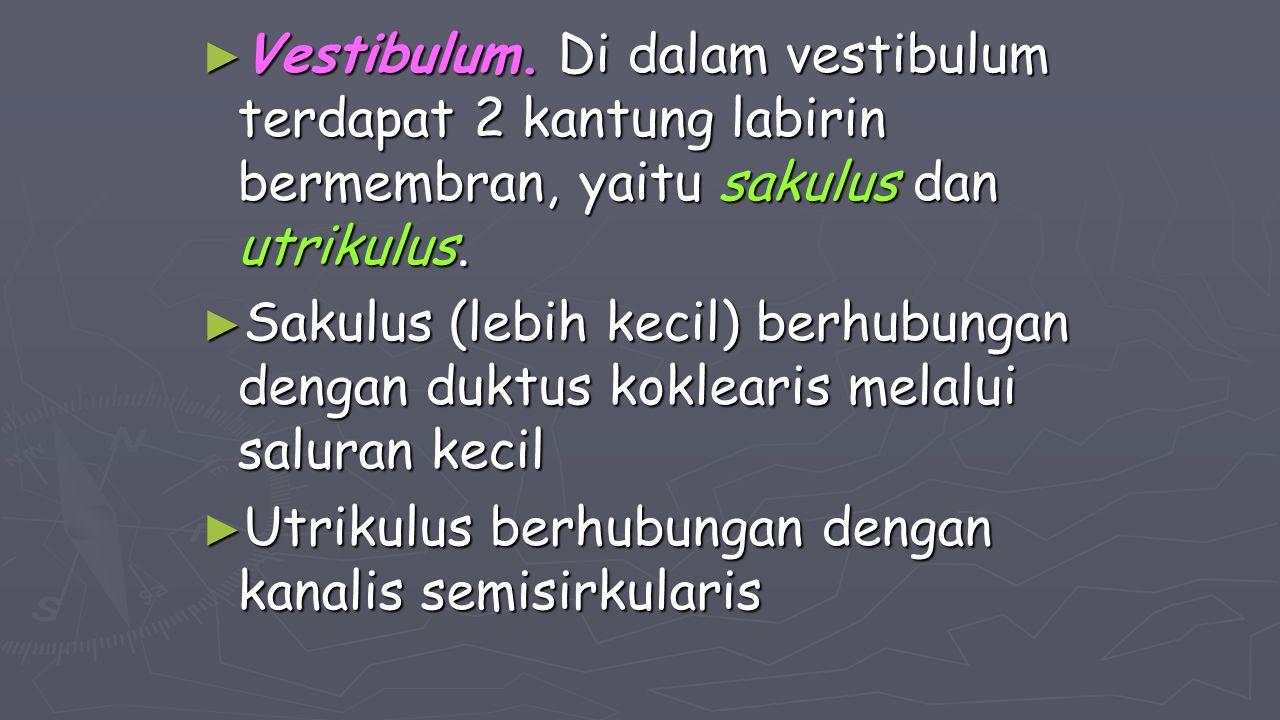 Vestibulum. Di dalam vestibulum terdapat 2 kantung labirin bermembran, yaitu sakulus dan utrikulus.