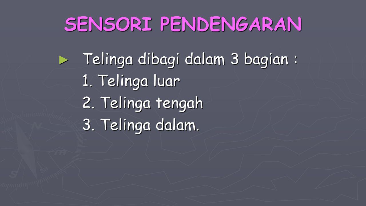 SENSORI PENDENGARAN Telinga dibagi dalam 3 bagian : 1. Telinga luar