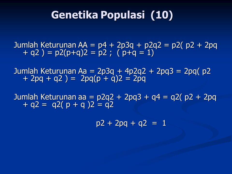 Genetika Populasi (10) Jumlah Keturunan AA = p4 + 2p3q + p2q2 = p2( p2 + 2pq + q2 ) = p2(p+q)2 = p2 ; ( p+q = 1)