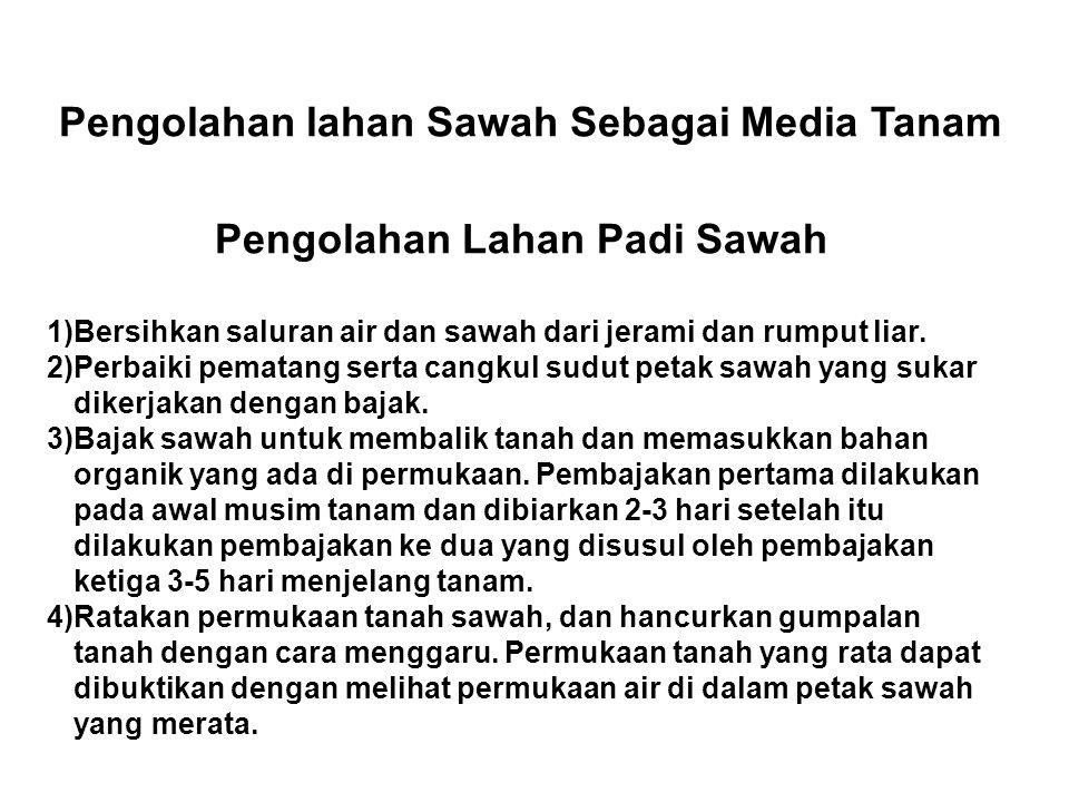 Pengolahan lahan Sawah Sebagai Media Tanam