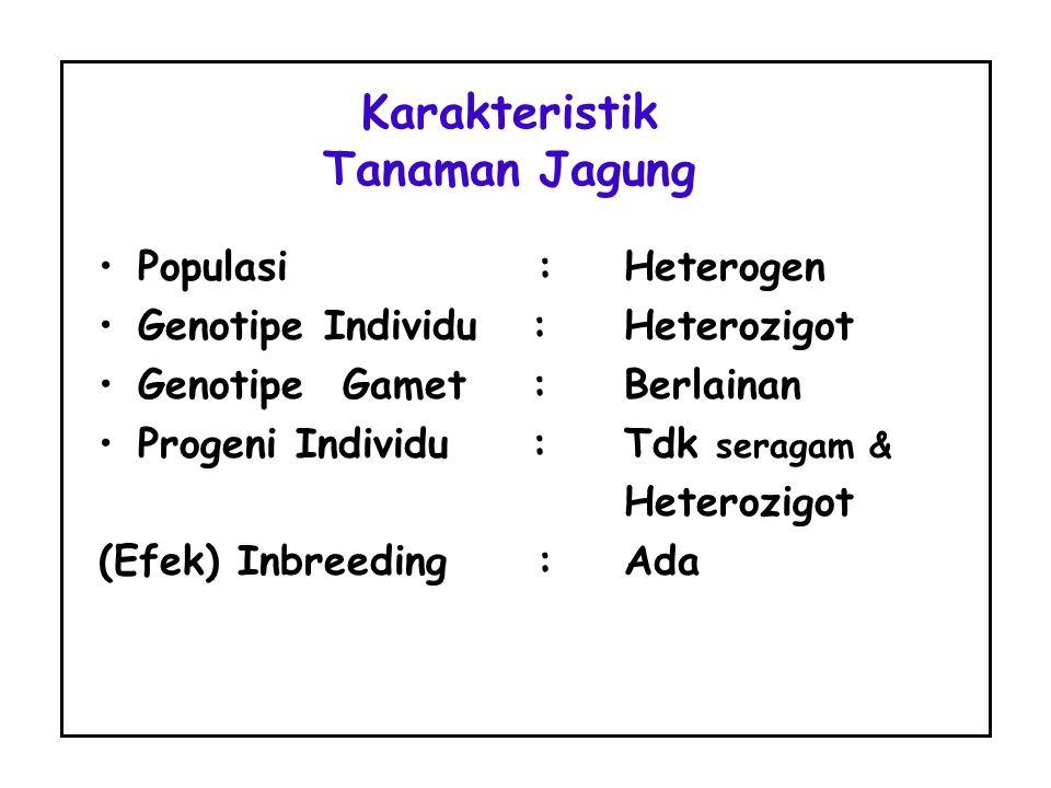 Karakteristik Tanaman Jagung