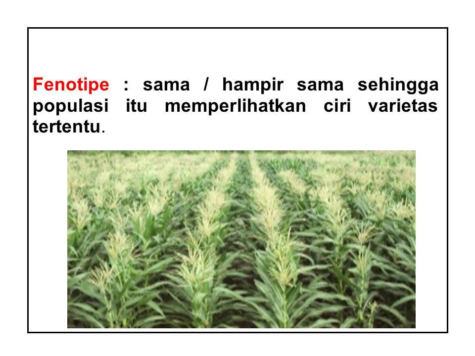 Fenotipe : sama / hampir sama sehingga populasi itu memperlihatkan ciri varietas tertentu.
