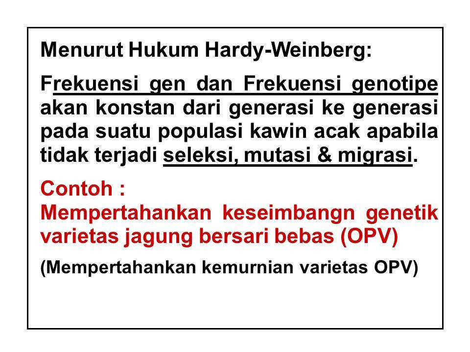 Menurut Hukum Hardy-Weinberg: