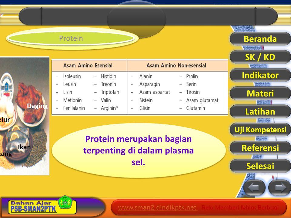 Protein merupakan bagian terpenting di dalam plasma sel.