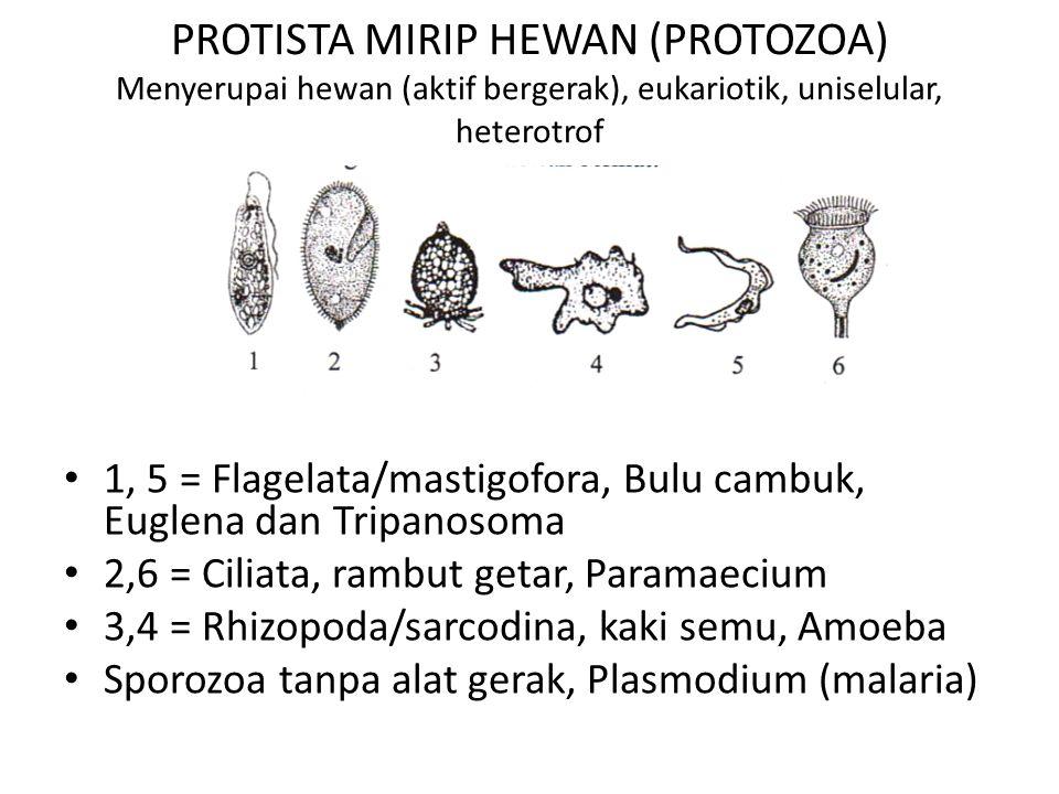 PROTISTA MIRIP HEWAN (PROTOZOA) Menyerupai hewan (aktif bergerak), eukariotik, uniselular, heterotrof