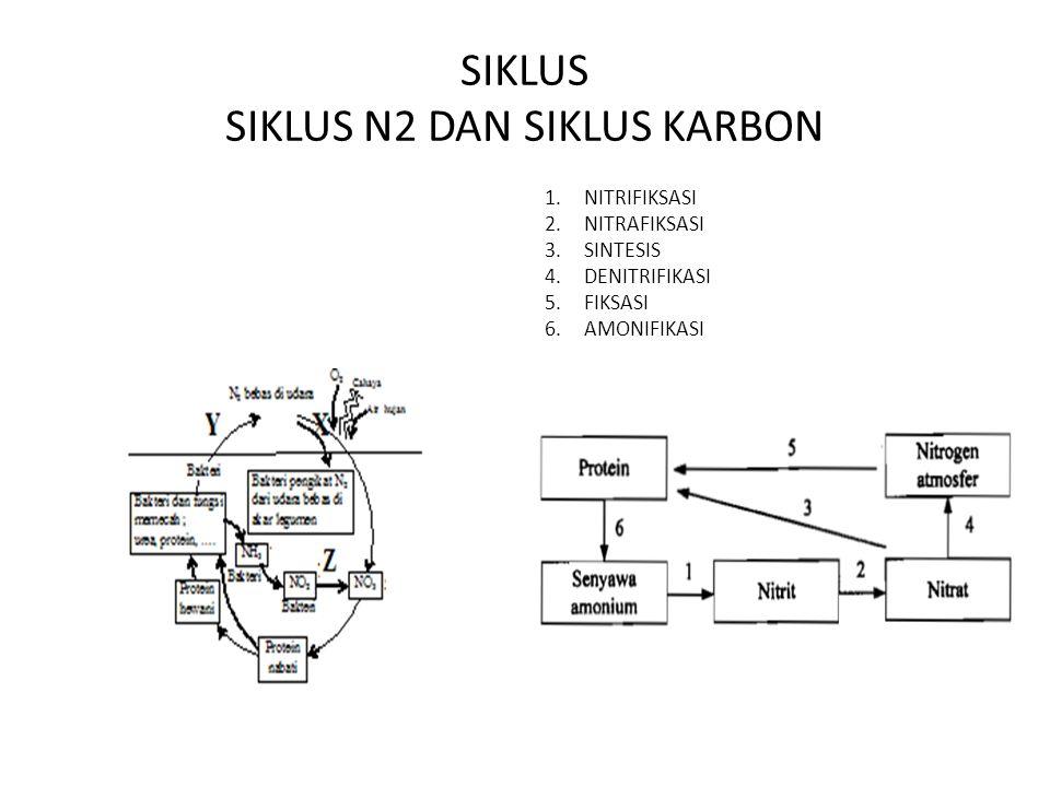 SIKLUS SIKLUS N2 DAN SIKLUS KARBON
