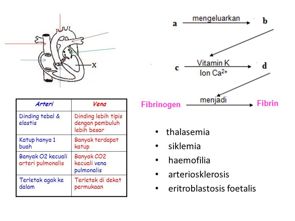 eritroblastosis foetalis