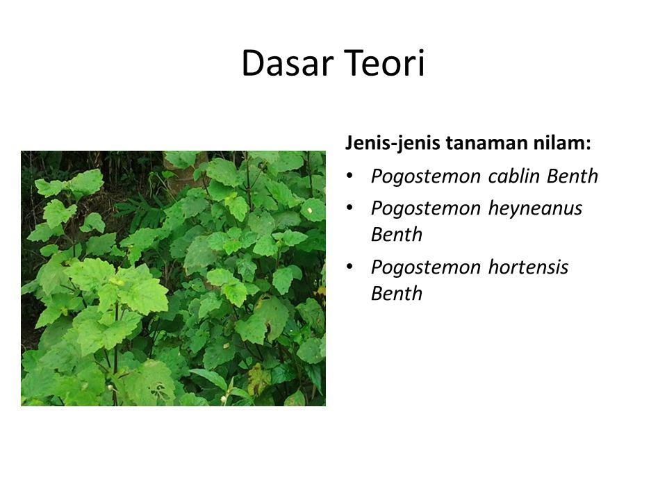 Dasar Teori Jenis-jenis tanaman nilam: Pogostemon cablin Benth