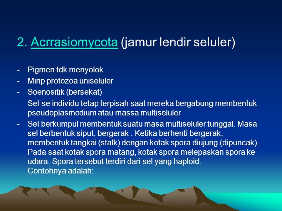 2. Acrrasiomycota (jamur lendir seluler)