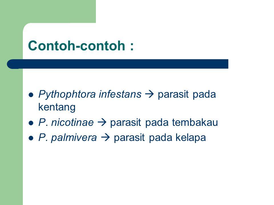 Contoh-contoh : Pythophtora infestans  parasit pada kentang