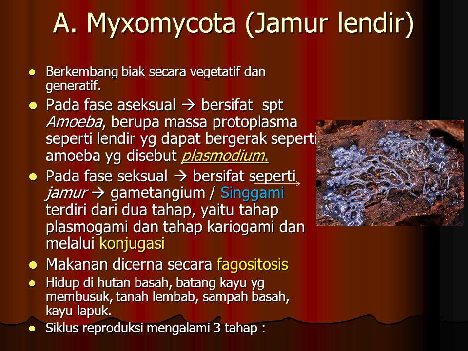 A. Myxomycota (Jamur lendir)
