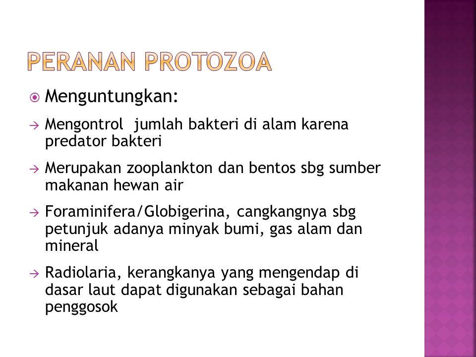 PERANAN PROTOZOA Menguntungkan: