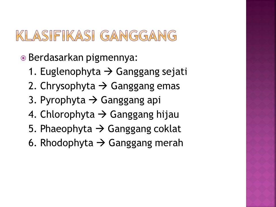 KLASIFIKASI GANGGANG Berdasarkan pigmennya: