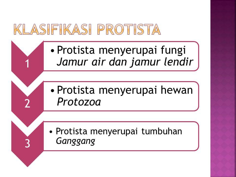 KLASIFIKASI PROTISTA Protista menyerupai tumbuhan Ganggang 1