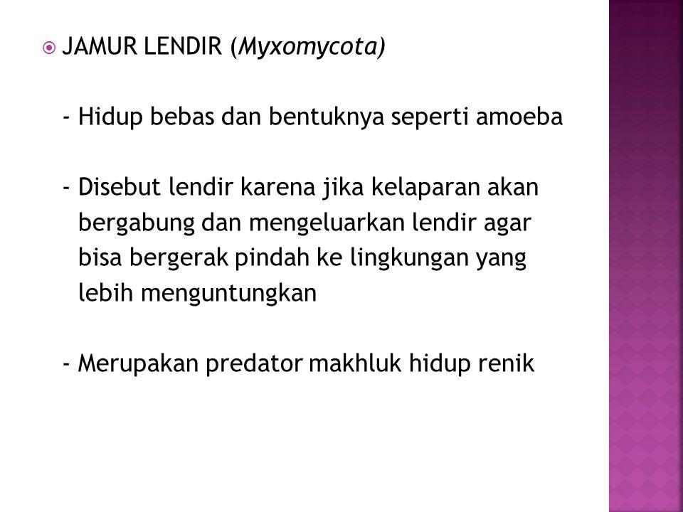JAMUR LENDIR (Myxomycota)