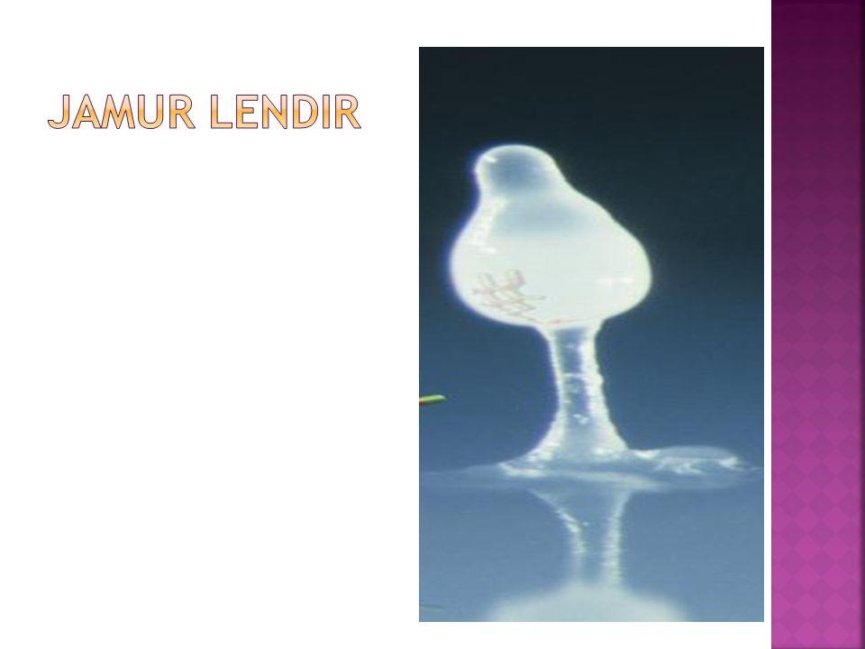 Jamur LENDIR