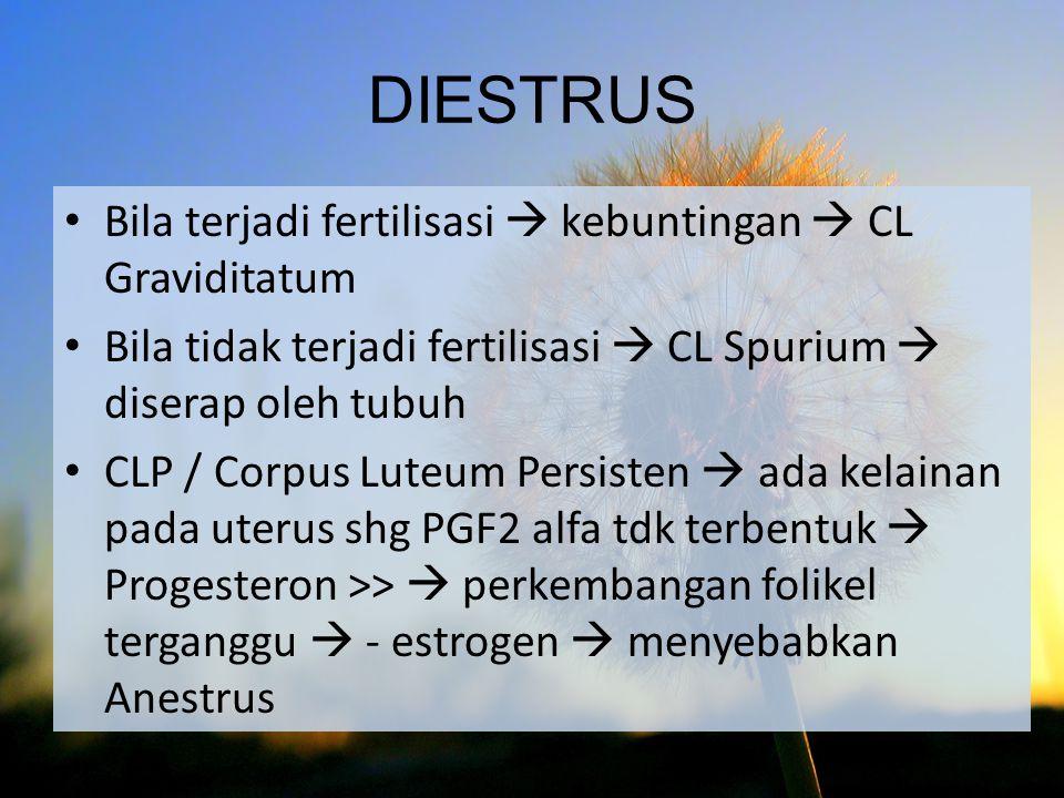 DIESTRUS Bila terjadi fertilisasi  kebuntingan  CL Graviditatum