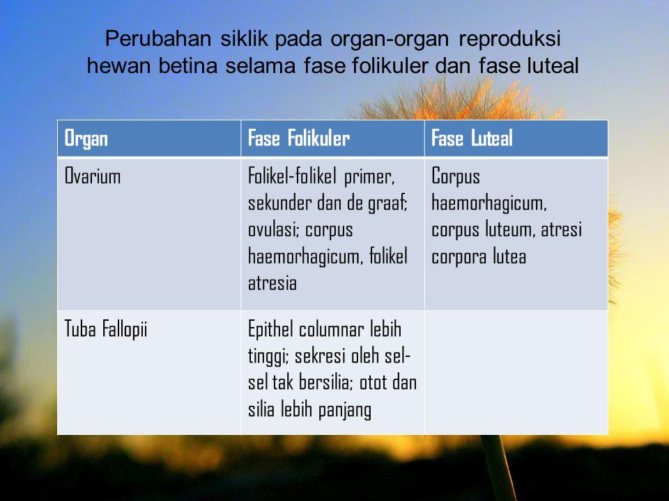Perubahan siklik pada organ-organ reproduksi hewan betina selama fase folikuler dan fase luteal