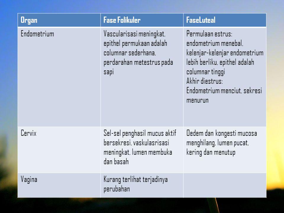 Organ Fase Folikuler. FaseLuteal. Endometrium.
