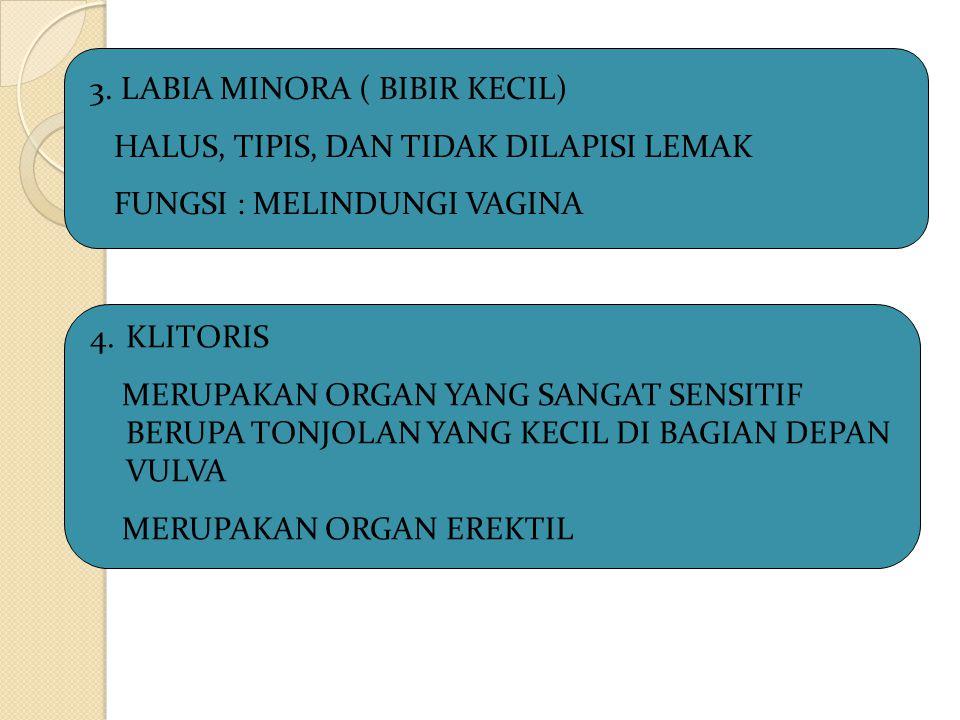 3. LABIA MINORA ( BIBIR KECIL)