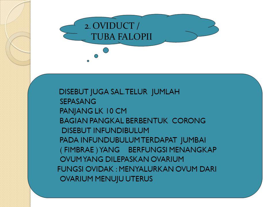 2. OVIDUCT / TUBA FALOPII SEPASANG PANJANG LK 10 CM