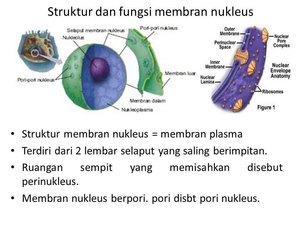 Struktur dan fungsi membran nukleus