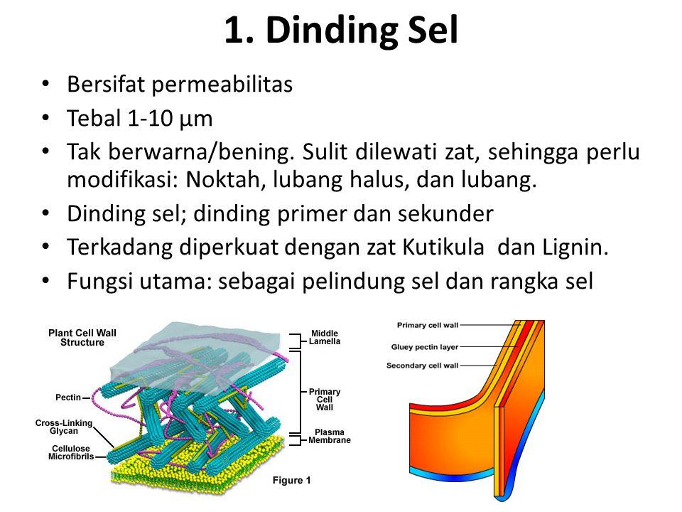 1. Dinding Sel Bersifat permeabilitas Tebal 1-10 µm