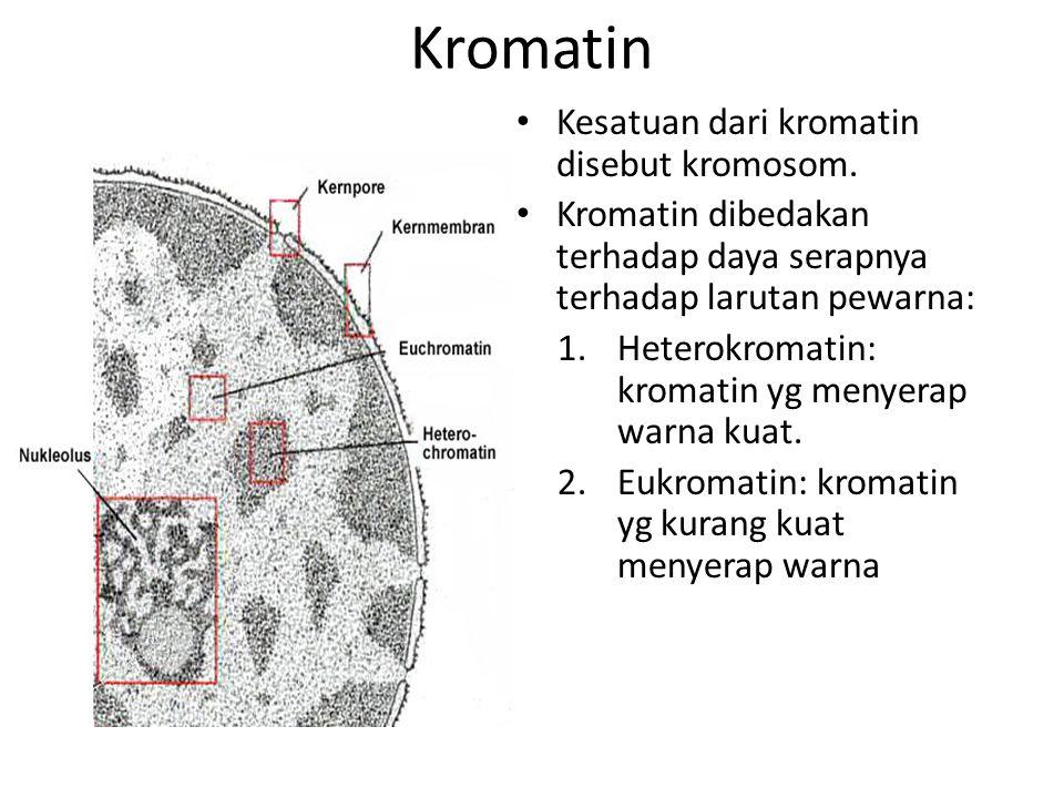 Kromatin Kesatuan dari kromatin disebut kromosom.