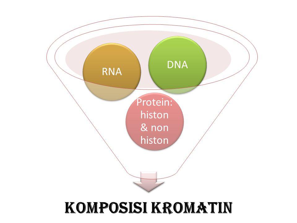Protein:histon & non histon
