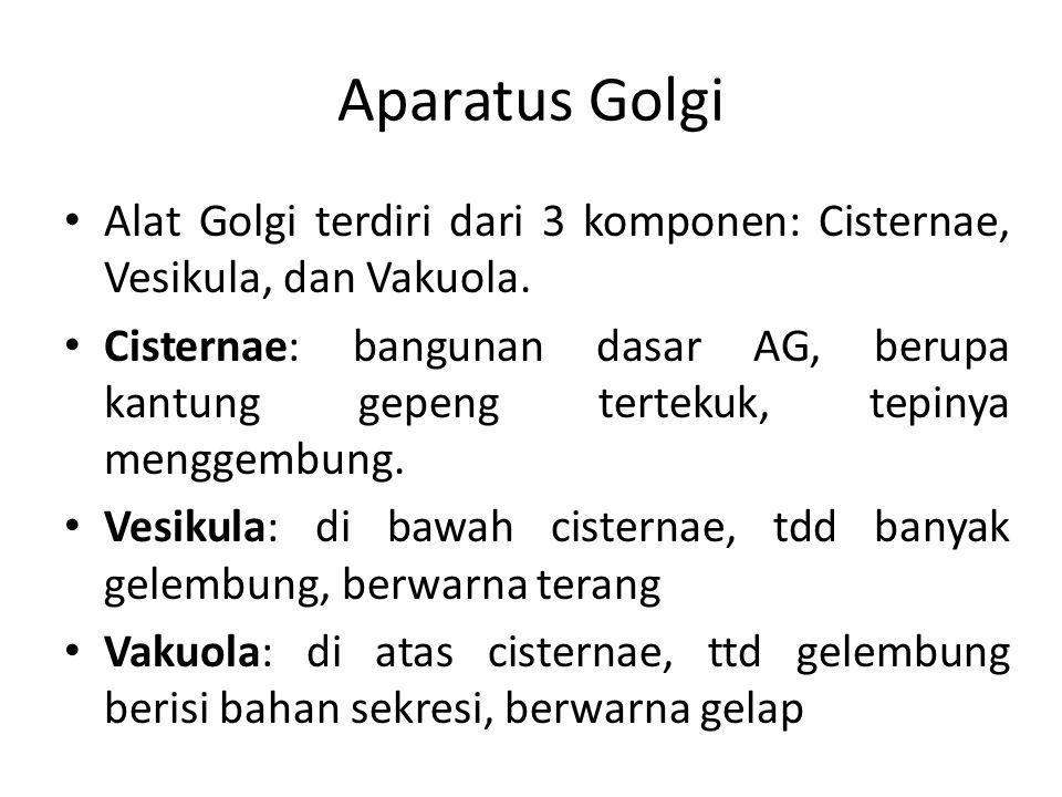 Aparatus Golgi Alat Golgi terdiri dari 3 komponen: Cisternae, Vesikula, dan Vakuola.