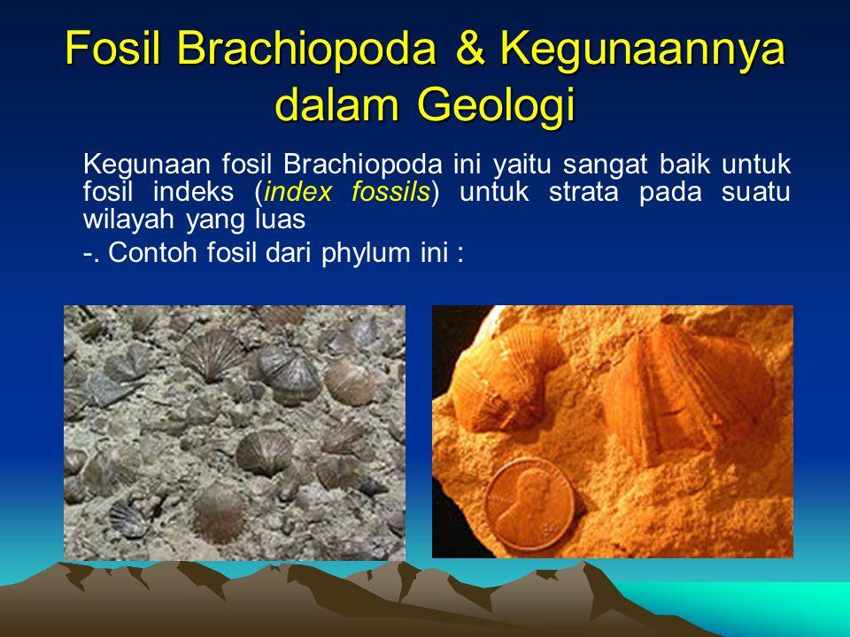 Fosil Brachiopoda & Kegunaannya dalam Geologi
