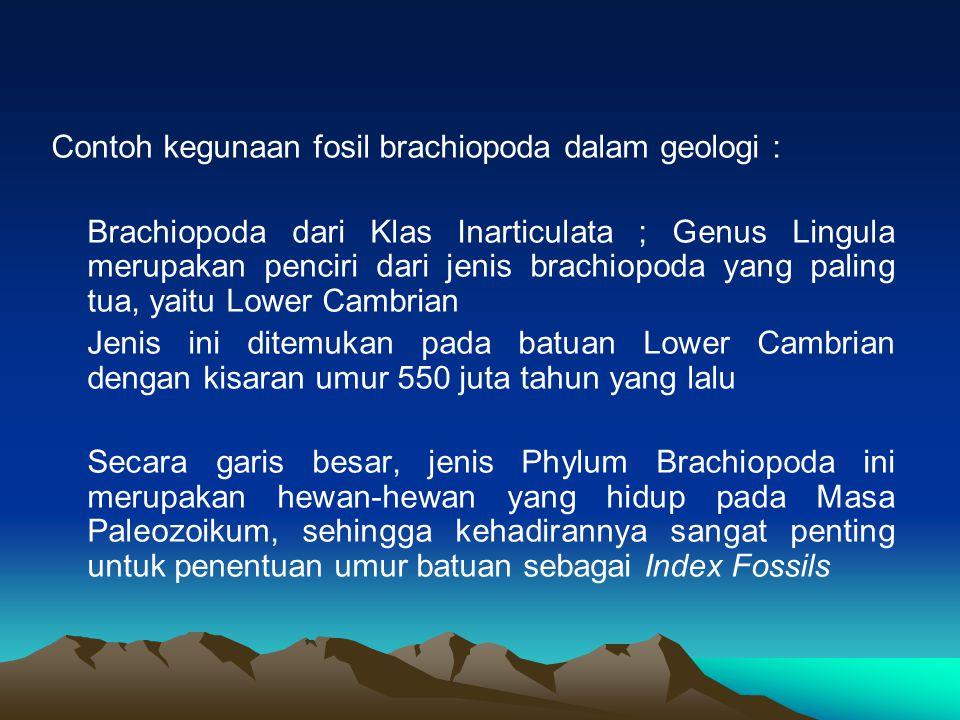 Contoh kegunaan fosil brachiopoda dalam geologi :
