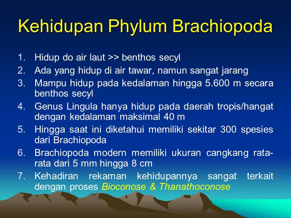 Kehidupan Phylum Brachiopoda