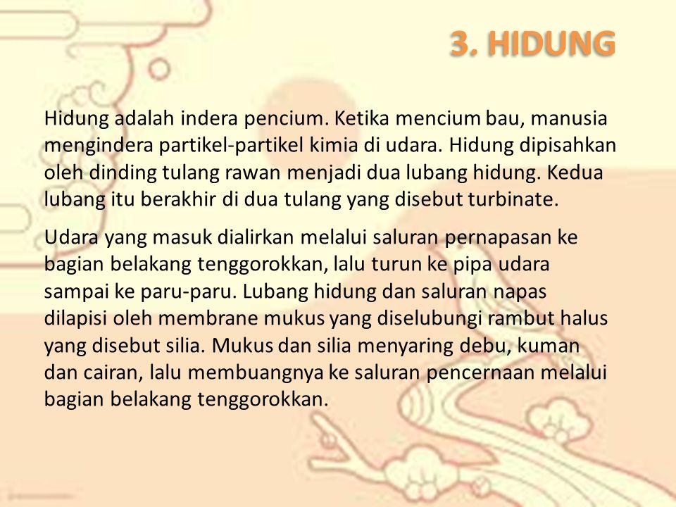 3. HIDUNG